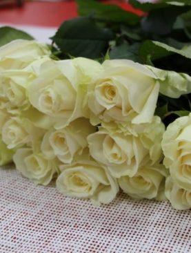 Роза Голландия, (70 см)