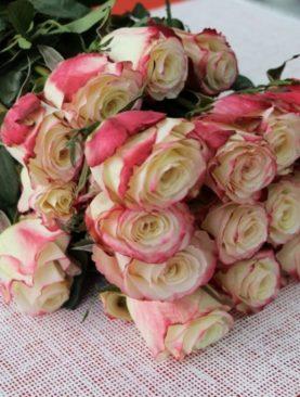 Роза Голландия, (90 см)