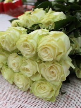 Роза Голландия, (80 см)