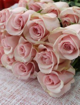 Роза Голландия, (40см)