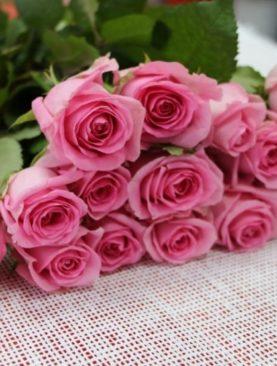 Роза Голландия, (60см)