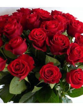 Роза Голландия, (100см)