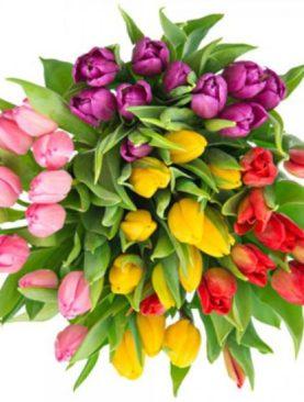 Тюльпаны голландские в ассортименте
